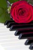 Rosa no teclado Imagens de Stock