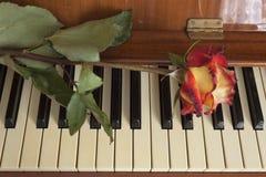 Rosa no teclado de piano Imagens de Stock