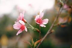 Rosa nordliga blommor Arkivfoto