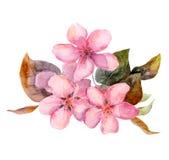 Rosa Obstbaum blüht - Apfel, Kirsche, Pflaume, Kirschblüte Lizenzfreie Abbildung