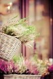 Rosa och purpurfärgad ljung i dekorativ blomkruka arkivfoton