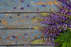 Rosa och purpurfärgad lupineblommagräns Dag för födelsedag-, moder` s, kort för dag, för mars 8, för bröllop för valentin` s elle Fotografering för Bildbyråer
