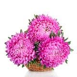 Rosa och purpurfärgad piongrupp som isoleras på vit bakgrund Arkivfoton