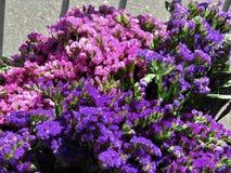 Rosa och purpurfärgade staticeblommor Arkivbilder