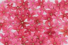 Rosa och röd blommabakgrund Arkivbilder