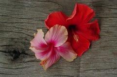 Rosa och röd chinarose på den wood tabellen arkivbild