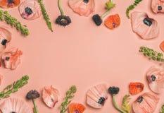 Rosa och röda blommakronblad, filialer, sidor på rosa bakgrund Royaltyfri Bild