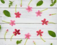 Rosa och röda blommor med gröna sidor Fotografering för Bildbyråer