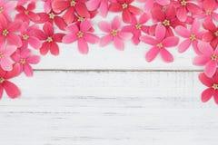 Rosa och röda blommor på vitt trä Arkivbilder