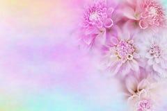 Rosa och vit bakgrund för dahliablommaram i mjuk tappningsignal med kopieringsutrymme för text arkivbild