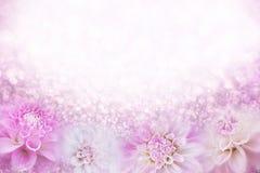 Rosa och vit bakgrund för dahliablommaramen i mjuk tappningsignal med blänker ljus och bokeh, kopieringsutrymme för text fotografering för bildbyråer
