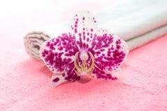 Rosa och vit orchid Arkivbild
