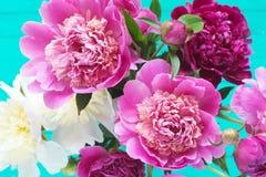 Rosa och vit pionbukett på blå bakgrund royaltyfri foto