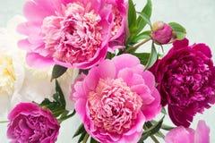 Rosa och vit pionbukett på ljus bakgrund arkivbild