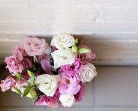 Rosa och vita blommor (överkanten ner) Royaltyfri Bild