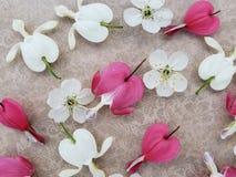 Rosa och vita blommor f?r bl?dande hj?rta med k?rsb?rsr?da blomningar spridda p? romantisk bakgrund fotografering för bildbyråer