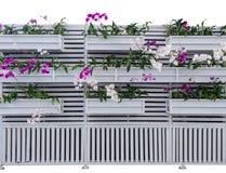 Rosa och vita orkidér dekorerar i trämagasinet som hänger på vita träyttersidaväggar arkivbild