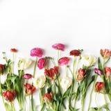 Rosa och vita rosor eller ranunculus och tulpan Royaltyfria Foton