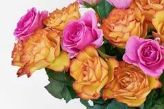 Rosa och vita rosor på vit bakgrund kopiera avstånd royaltyfri fotografi