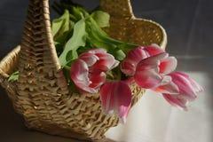 Rosa och vita tulpan i en korg Arkivbild