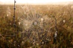 rosa opuszcza pająk sieć Obrazy Royalty Free