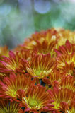 Rosa, orange und gelbe Blumen Lizenzfreies Stockfoto