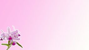 Rosa orchidbakgrund Royaltyfri Fotografi