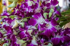 Rosa Orchidblomma Royaltyfri Foto