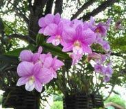 Rosa Orchidee Lizenzfreie Stockbilder