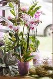Rosa Orchidee im flowershop Lizenzfreie Stockbilder