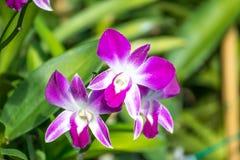 Rosa Orchidee und grüne Blätter lizenzfreie stockfotos