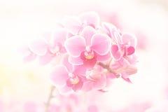 Rosa Orchideen Stockfotografie