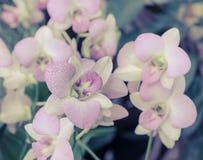Rosa Orchideen-Blume Lizenzfreies Stockbild