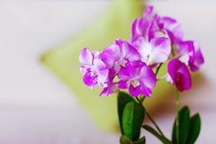 Rosa Orchideen im Innenraum Stockfoto