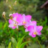 Rosa Orchideenblume mit grünem Blatt Stockfoto