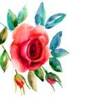 Rosa original floresce a ilustração Fotos de Stock Royalty Free