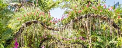 Rosa orkidé Arkivfoton
