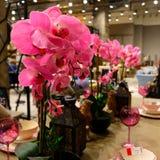 Rosa orkidé, dekorativa ljus, rosa bägare, dekorativ tabell för gammal stil Royaltyfri Fotografi