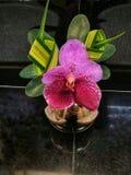Rosa orkidé i vasen Royaltyfri Foto