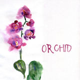 Rosa orkidé som isoleras på vit Stock Illustrationer