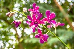 Rosa orkidéblomma för grupp Royaltyfri Fotografi