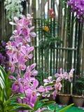 Rosa orkidé. Fotografering för Bildbyråer