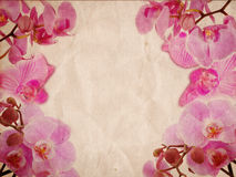 Rosa orkidér på retro grungebakgrund Royaltyfri Fotografi