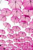 Rosa paraply Arkivfoto