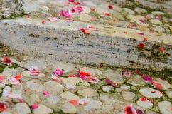 Rosa Pelargonienblumenblätter auf der Ziegelsteintreppe Lizenzfreie Stockfotos