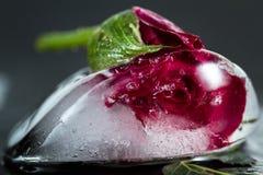 Rosa pequena do vermelho congelada em um bloco de gelo imagens de stock royalty free