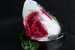 Rosa pequena do vermelho congelada em um bloco de gelo fotografia de stock