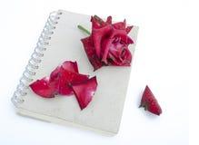 Rosa per amore diminuito Fotografia Stock