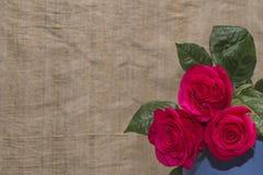 Rosa per il giorno del ` s del biglietto di S. Valentino Fotografia Stock