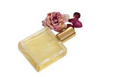 Rosa perfumada Foto de Stock